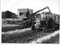 Albert Cuff gathering grain c1968