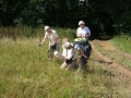On Saturday 08 August 09 we walked between Coombe Gibbet & Linkenholt along the Test Way